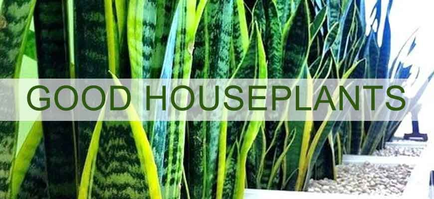 Good house plants in your home can improve your health