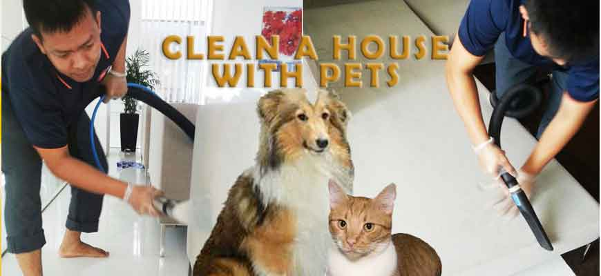 How to keep your home clean with pets