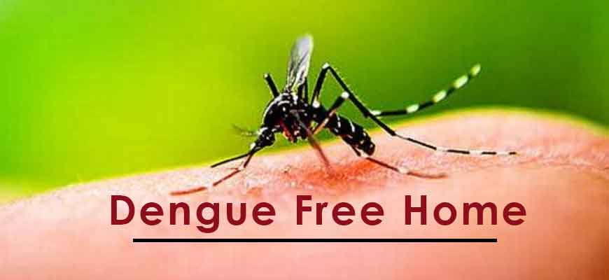 Dengue-free home, keep mosquitoes away